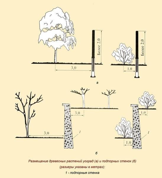 Посадка берез на участке Создаем красивый сад 172