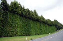 Время пересадки дерева может быть различным, но наилучшие месяцы для этого - сентябрь и апрель.