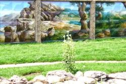 живопись на бетонном заборе