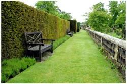 По высоте быстрорастущая живая изгородь делится на три типа:  бордюры (до 1-го метра); собственно живые изгороди (1-3 м); живые стены (3-6 м).