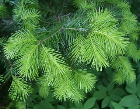 Естественная красота вечнозеленых растений украшает ландшафт не только в пору интенсивного роста, но и в зимнее время