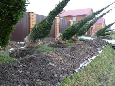 Между забором и деревом должно быть несколько метров
