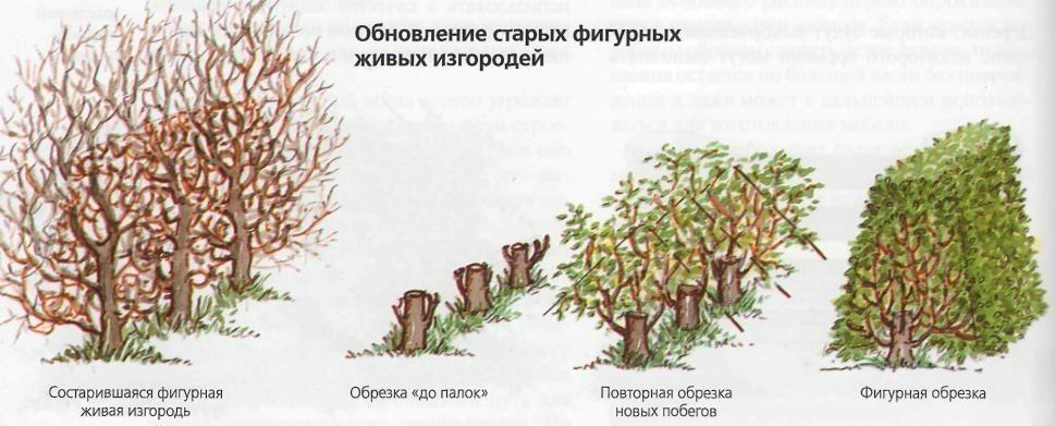 Обновление старых изгородей