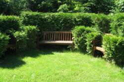 Скамейка, обрамленная живой изгородью