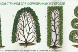 Стрижки для формирования изгородей