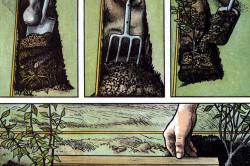 Иллюстрация посадки бирючины
