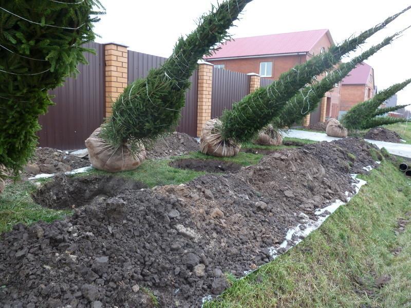На каком расстоянии соседи имеют право сажать деревья на 32