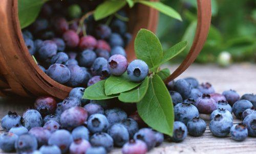 Для нормализации работы поджелудочной железы применяют листья или ягоды черники