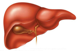 Заболевания печени - причина болей внизу живота