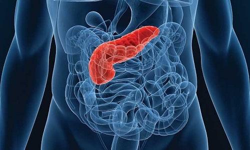 Паренхима поджелудочной железы представляет собой железистую ткань поджелудочной железы