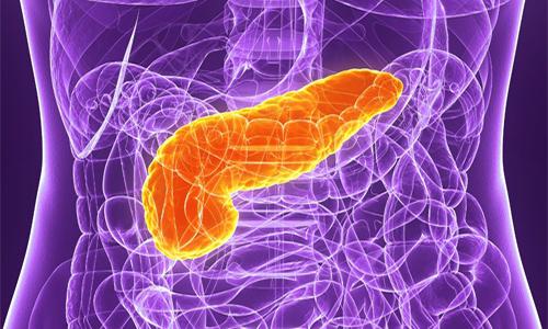 Поджелудочная железа - это орган, который способен перерабатывать вещества, содержащиеся в продуктах питания, в доступные ферменты для клеток кишечника