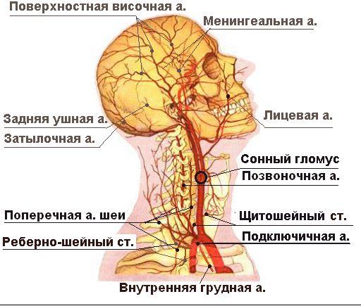 при прогрессирующем сколиозе высока вероятность сдавления позвоночной артерии