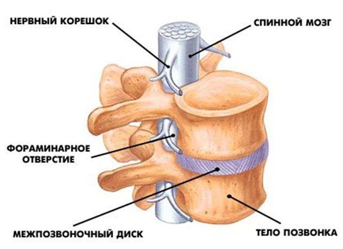 Главные причины болей в спине, иррадиирующих в ноги
