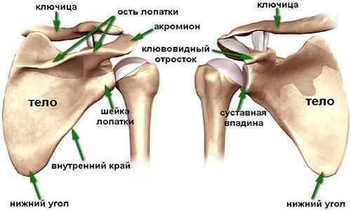 Направления в лечении артроза плечевого сустава