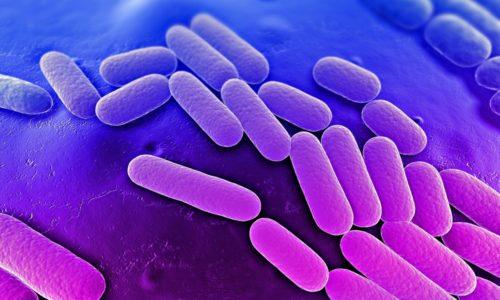 Бактерии поражают мочевыводящий орган на фоне снижения уровня эстрогена