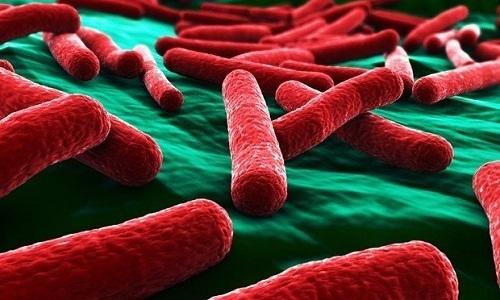 Инфекции выделительной системы, вызванные кишечной палочкой, на ранних стадиях протекают бессимптомно