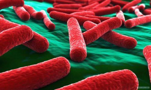 Цистит из-за кишечной палочки наиболее часто возникает при снижении иммунитета