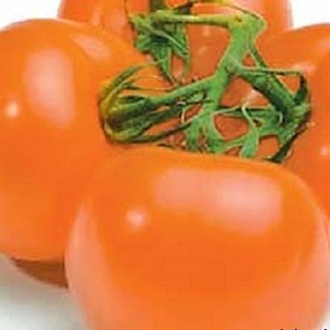 Оранжевые помидоры - безопаснее красных